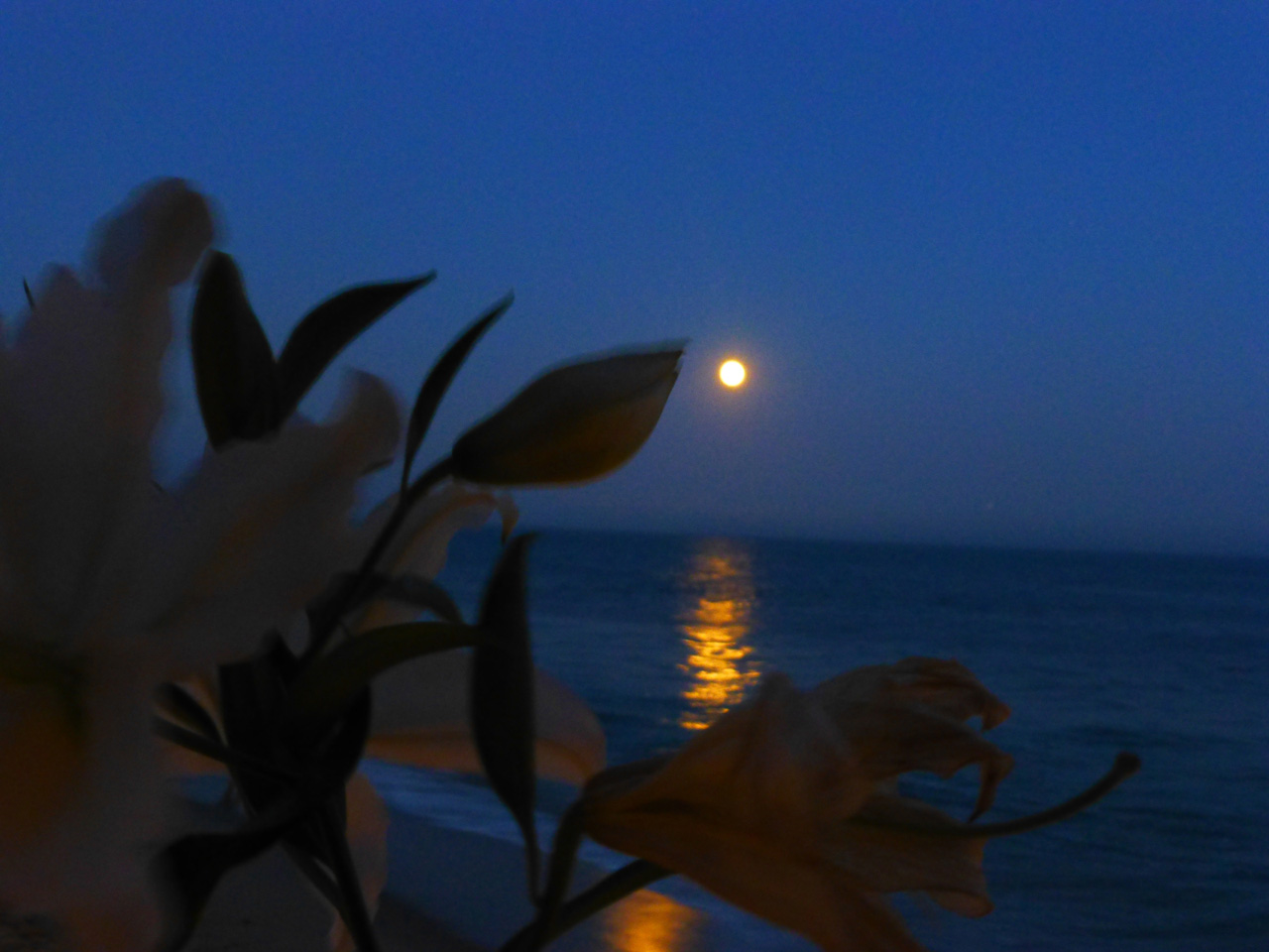 Supermoon Malibu, CA 2014 Photo by Laurie Lynn Stark
